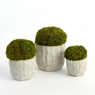 S/3 Contemporary Moss Arrangement